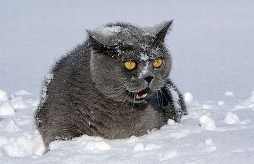 very mad kitty in snow