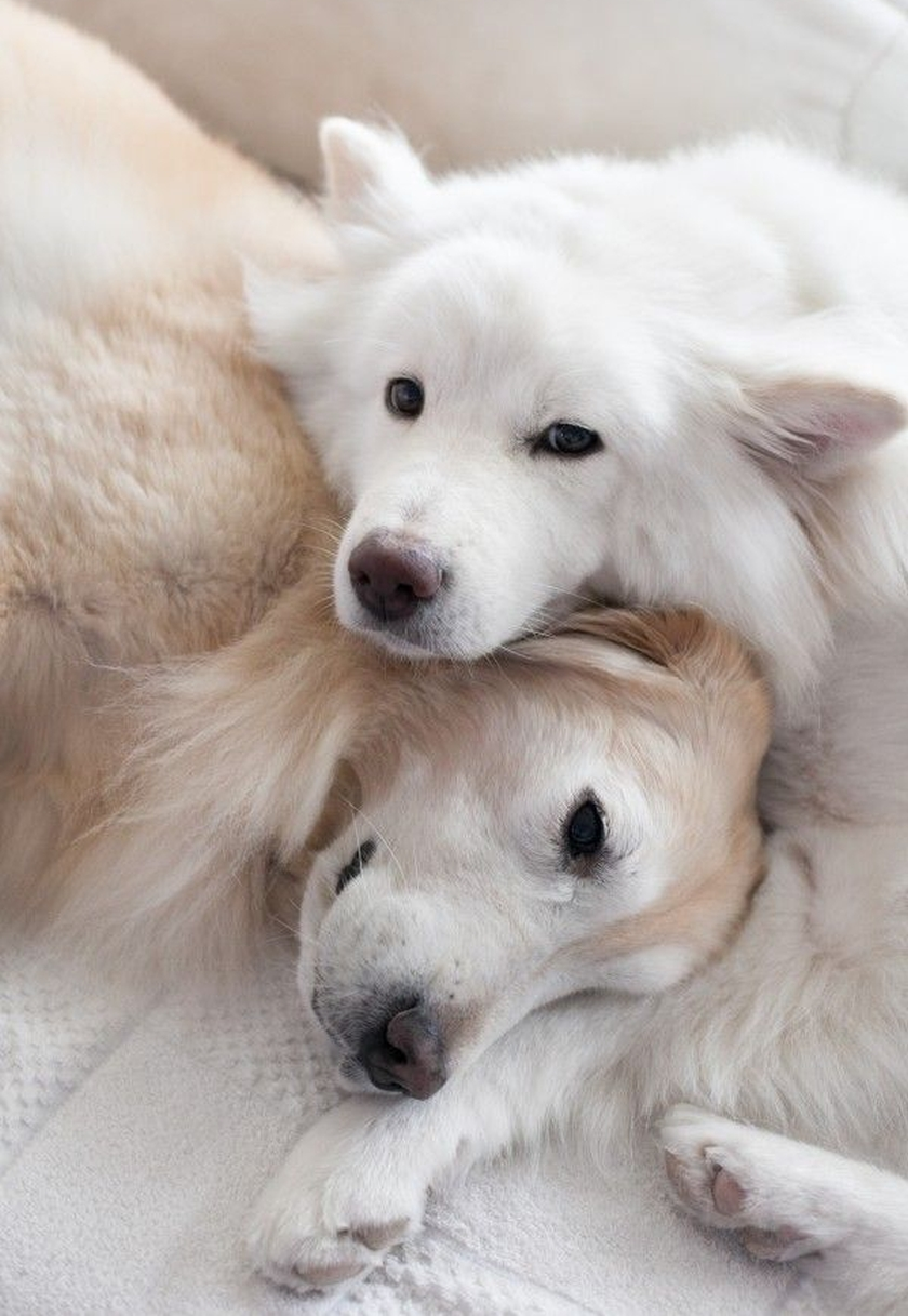 beautiful canine friends