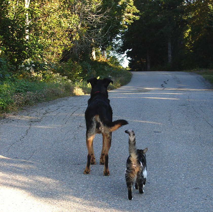dog and cat walk along road in the country