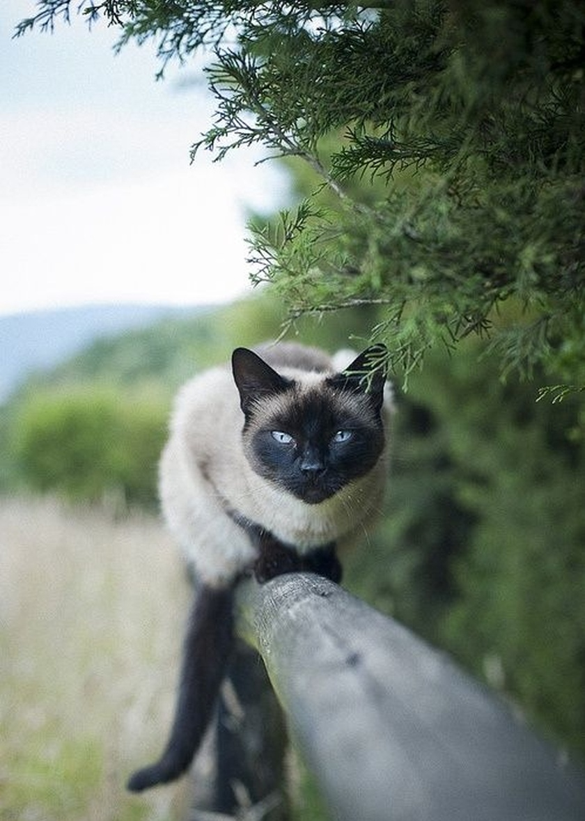 cat on fence pretty