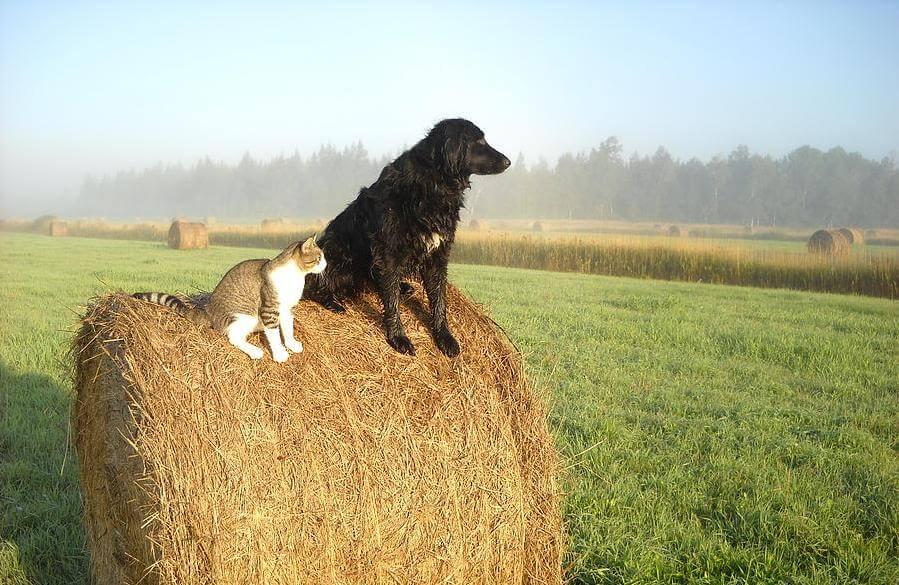 cat-and-dog-on-hay-bale-kent-lorentzen