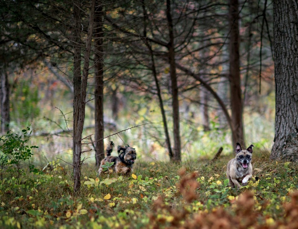 dogs running in the woods