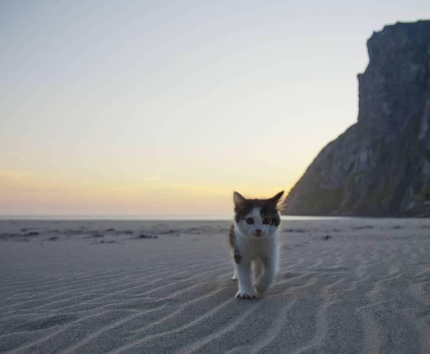kitten alone at sunset on beach