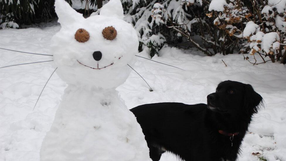 cat snowman dog cute