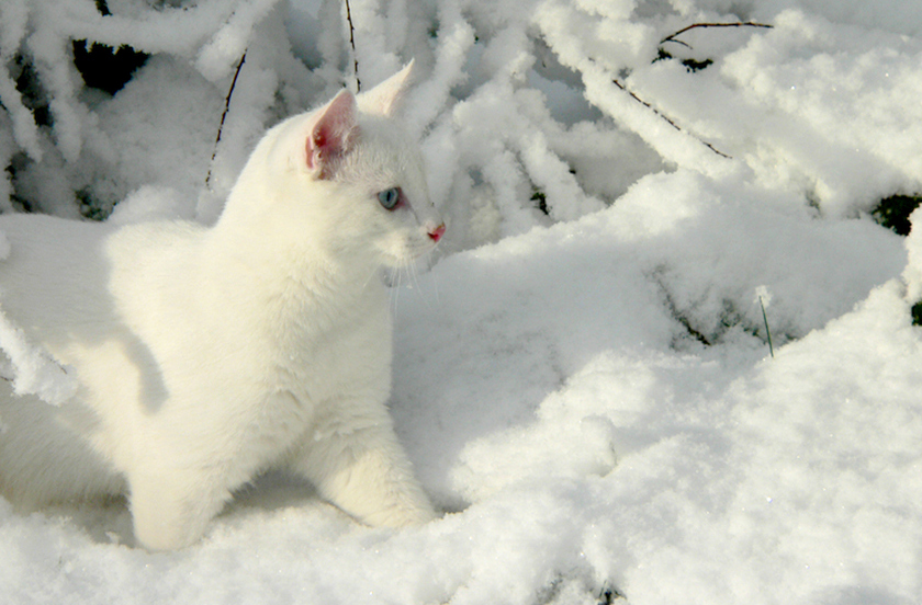 cats-cat-winter-snow-pretty