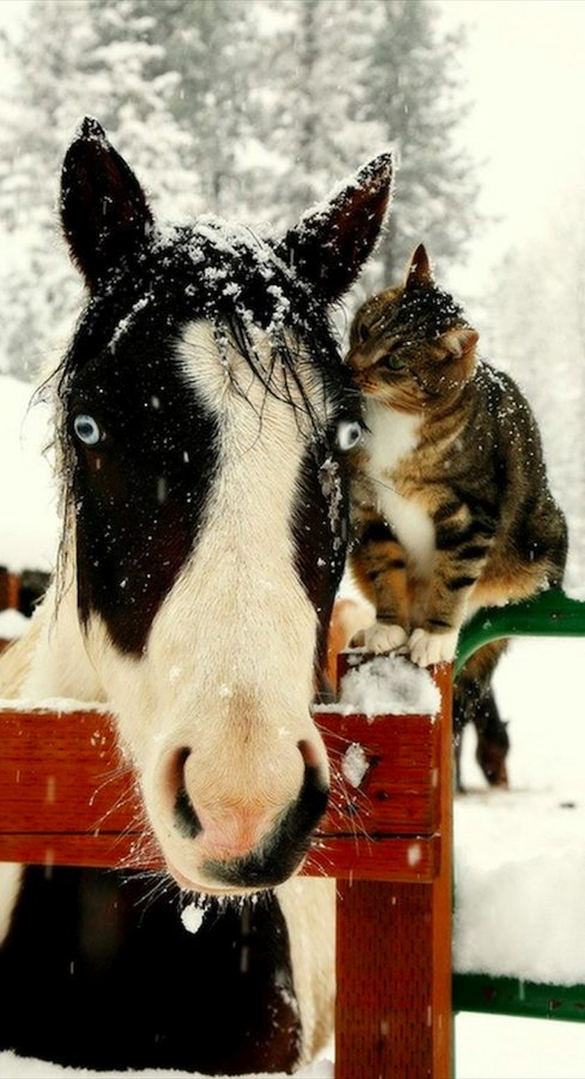 cat and horse bff snow pretty