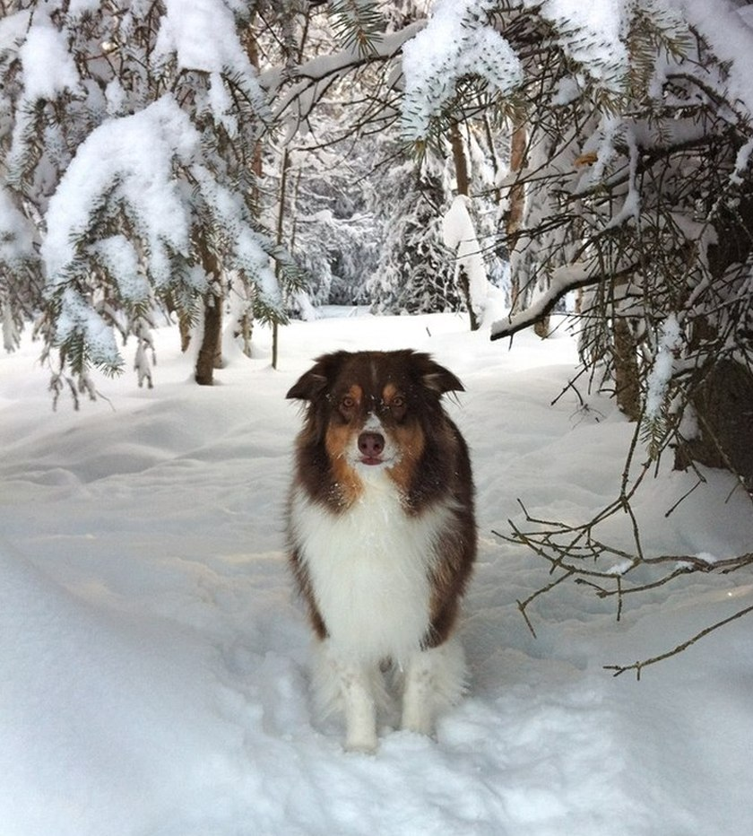 dog snow winter trees