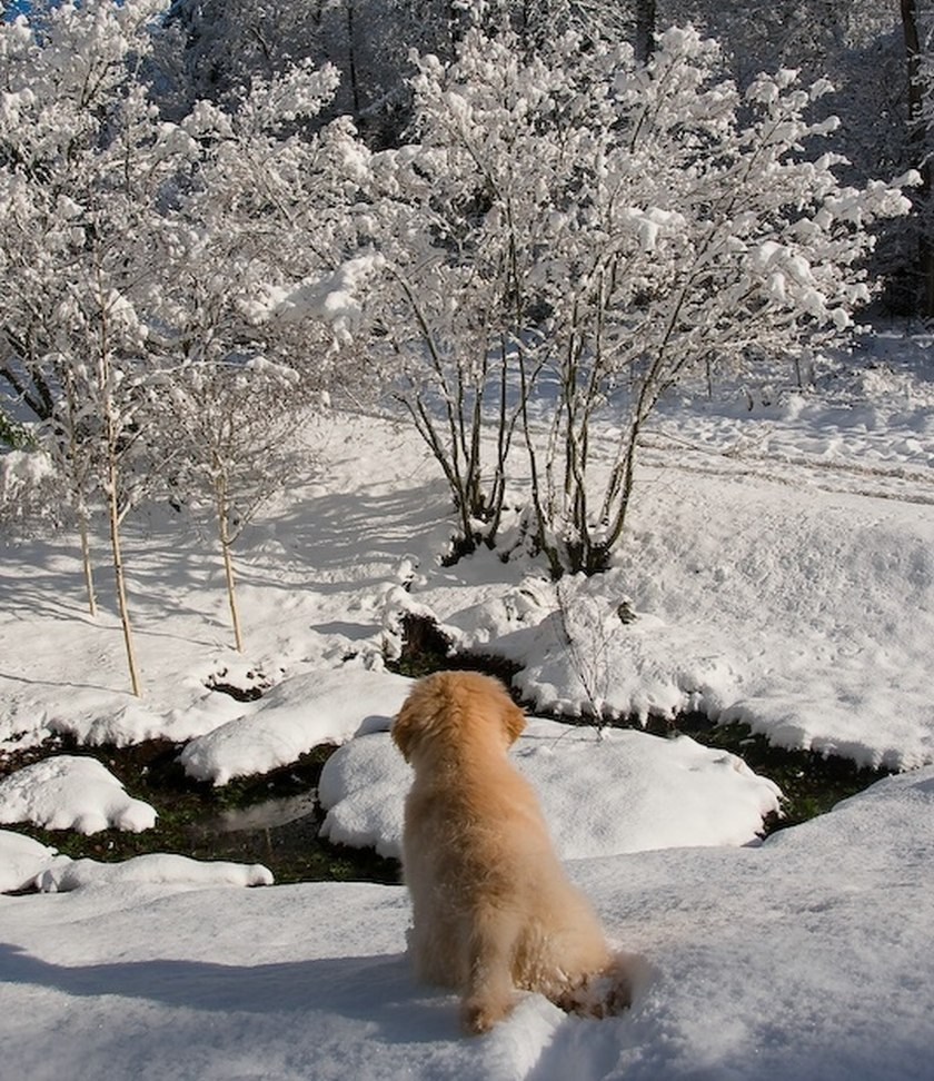 puppy in snow by creek