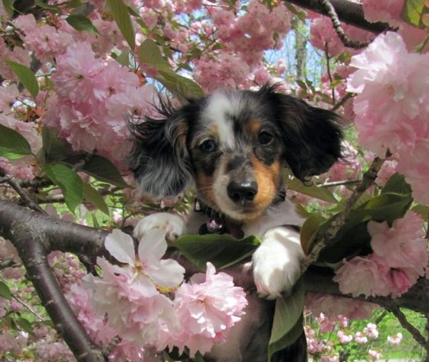 Puppy in tree